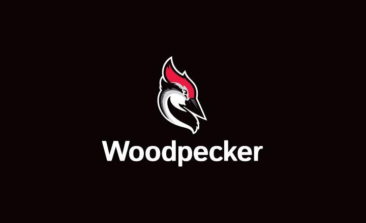 Zapisy na Woodpecker.co – na co warto zwrócić uwagę?